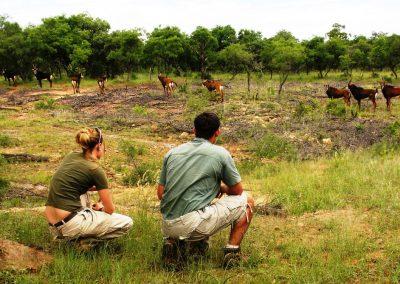Südafrika Madikwe Game Reserve Safari Makanyane Safari Lodge