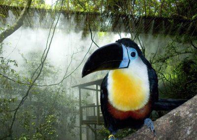 Südafrika Vögel Hog Hollow