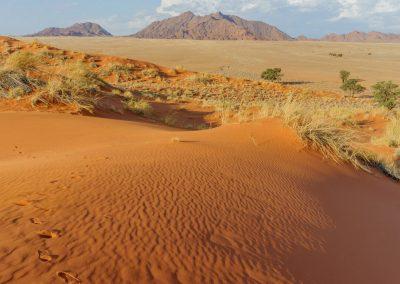 © Desert Homstead Lodge