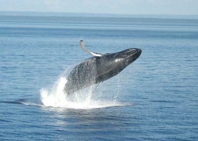 Wale, © Bonjour Québec